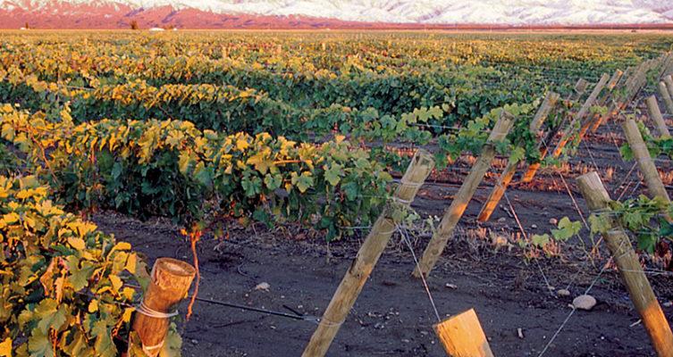 Saffer Wein Bodega San Gregorio