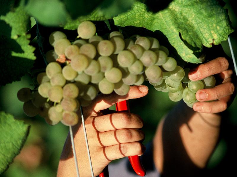 Saffer Wein Podere 29