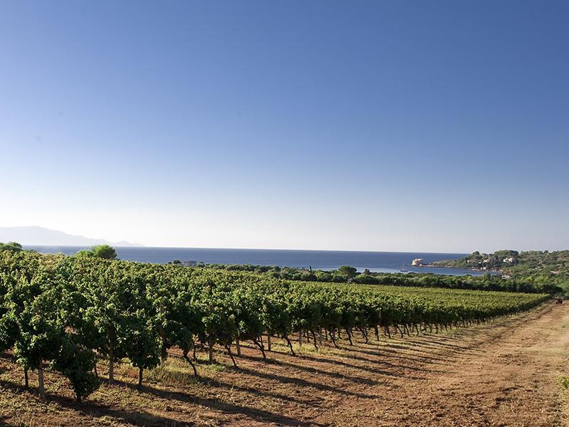 SantaMariaLaPalma foto panorama con vigneti sulla costa