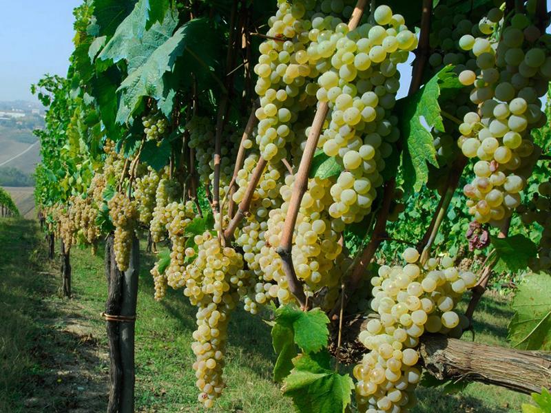 Saffer Wein Azienda agricola nativ