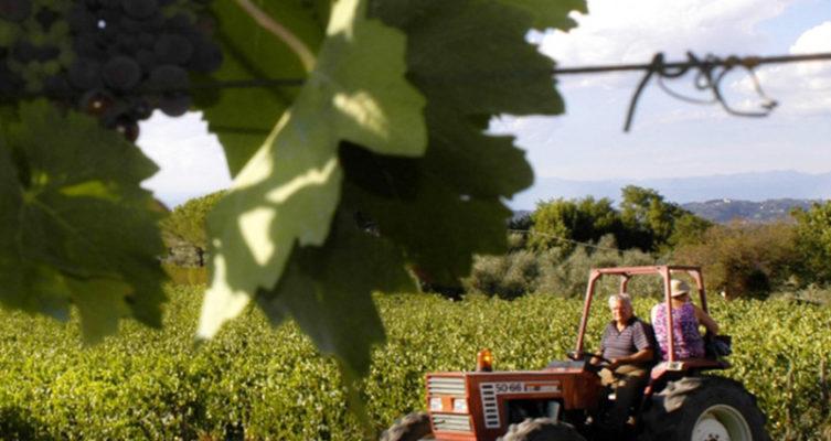 Saffer Wein Tenuta di Burchino