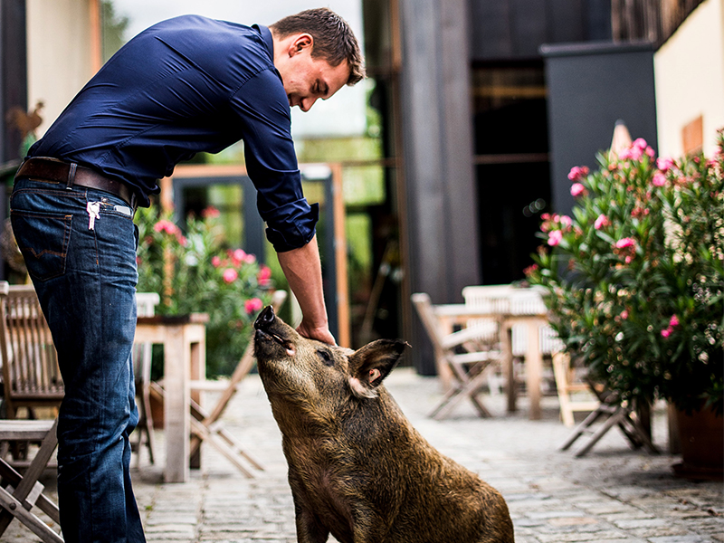 Genussgut Krispel Wollschwein